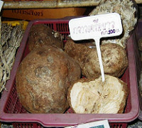 Picture of Pueraria mirifica root