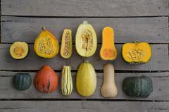 image of winter squash